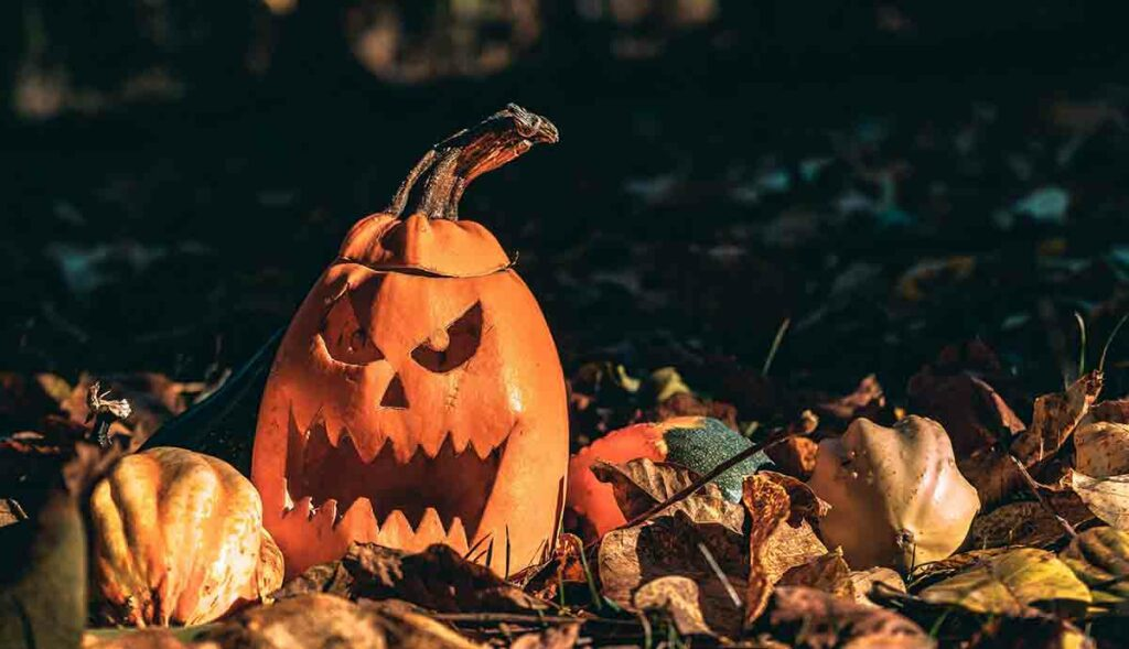 A carved pumpkin and gourds sitting in leaves symbolizing the celebration of Halloween.