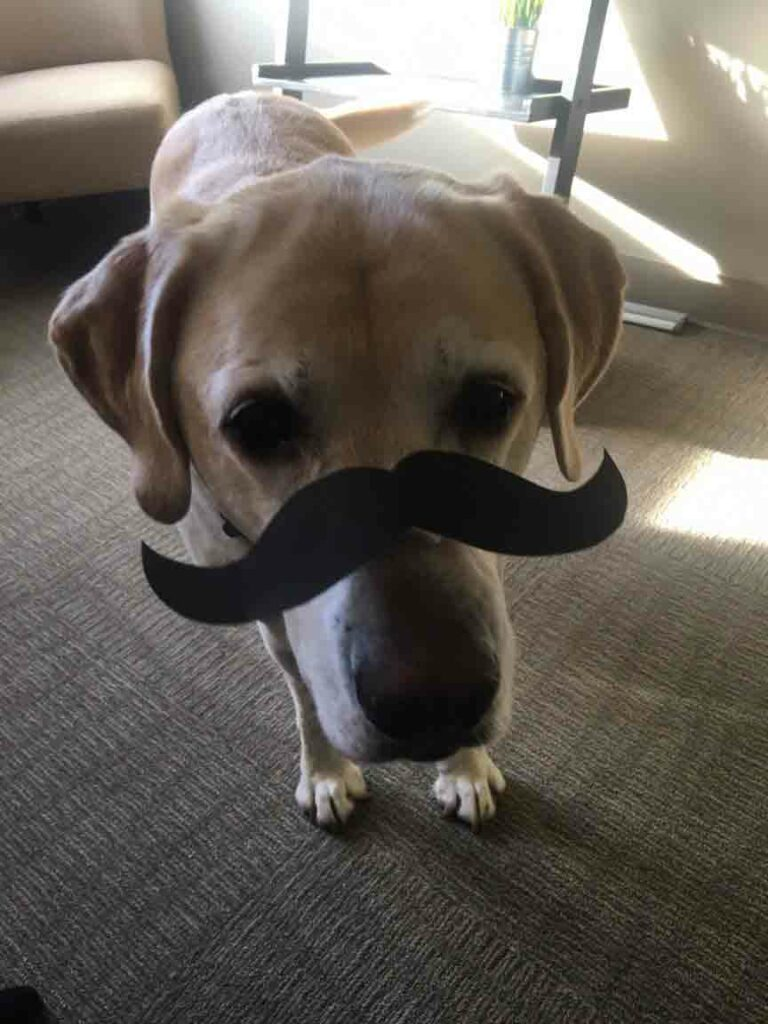 Close up of Kristin's dog, Rudy, wearing a paper mustache.